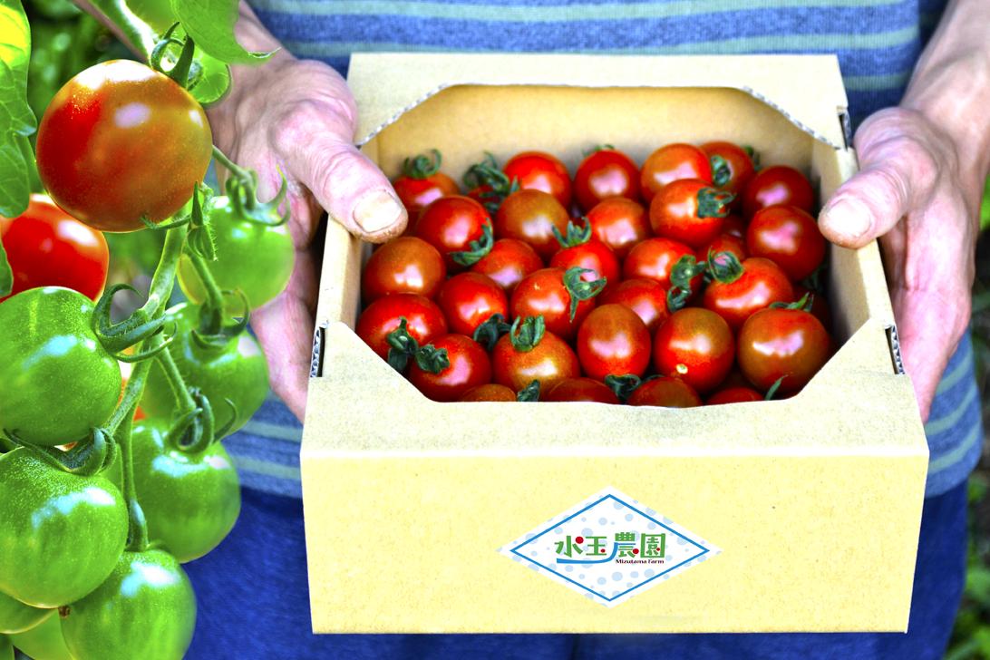 水玉農園のステラミニトマトの配達イメージ